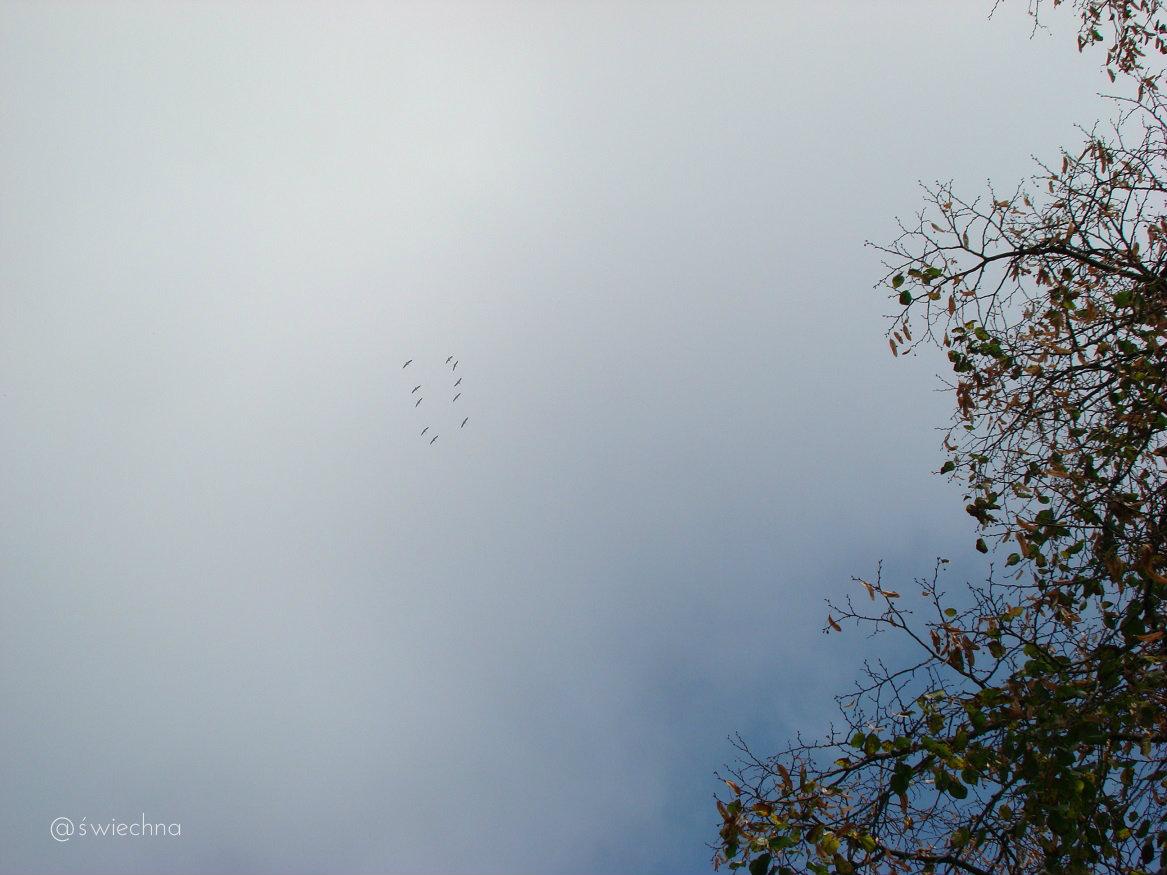 żurawie nostalgia wrzesień