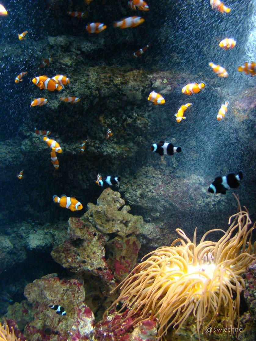 aquarium Bristol