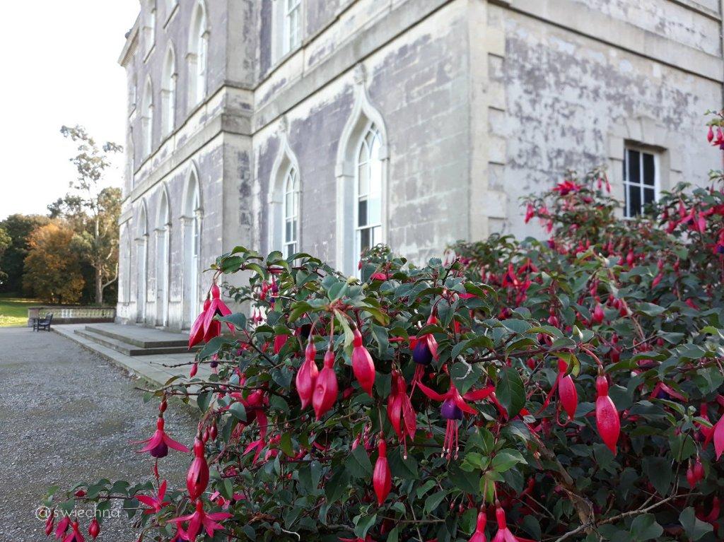 Niedziela Castle Ward naokoło (1)