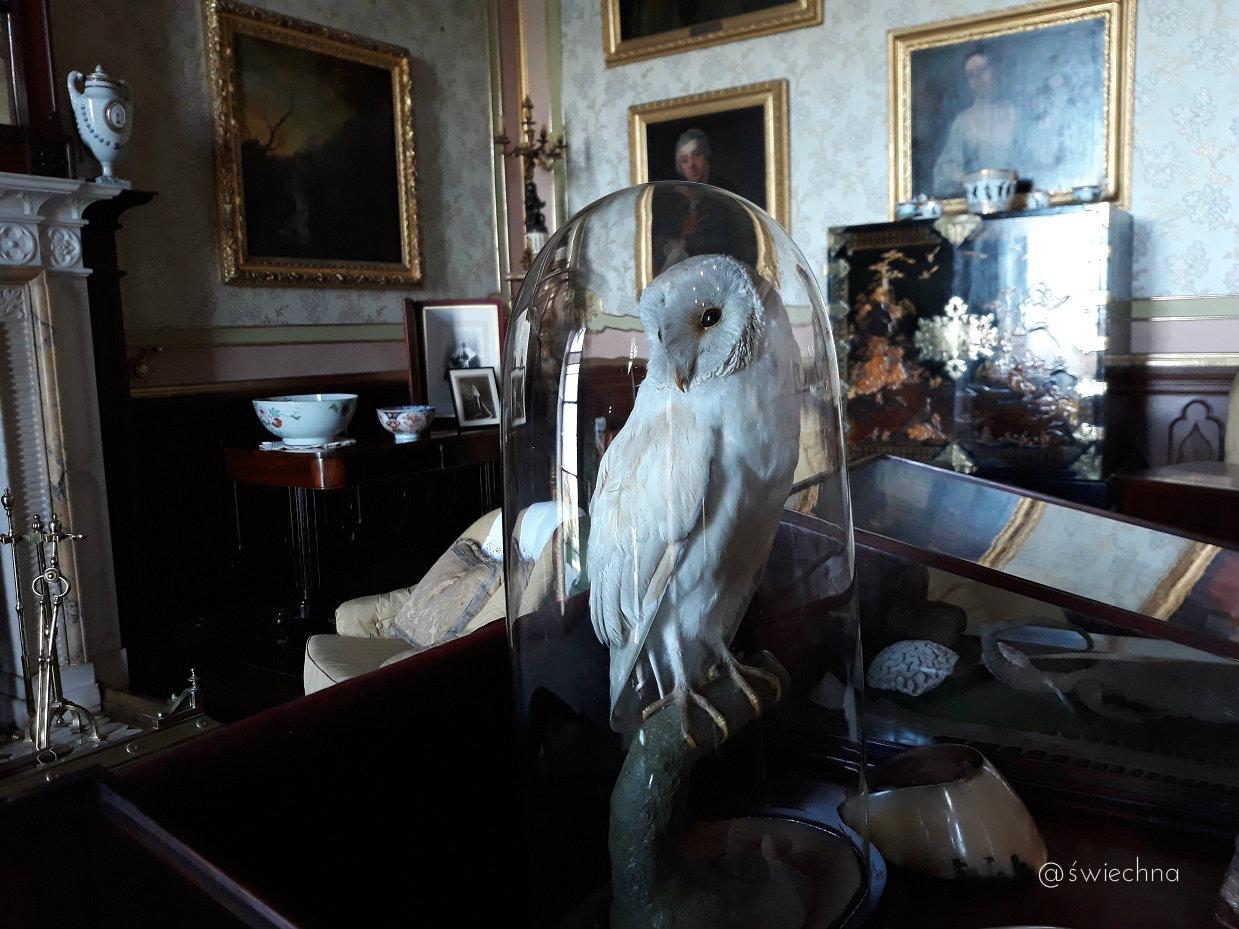 Niedziela Castle Ward wnętrza (4)